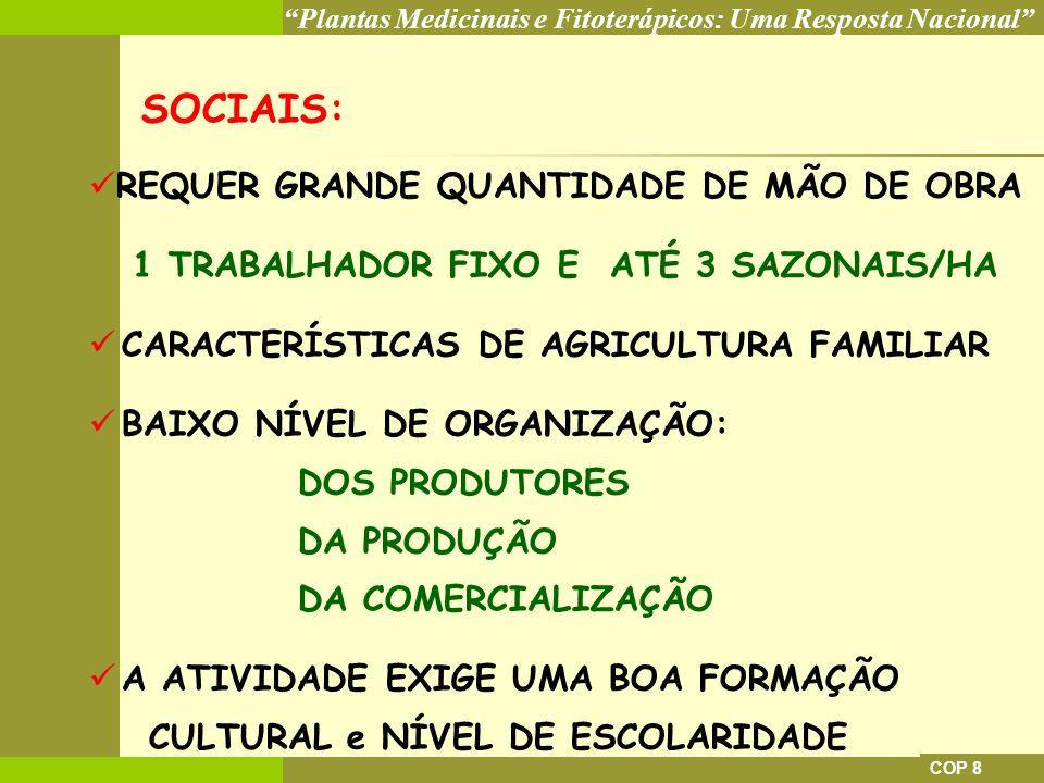 1 TRABALHADOR FIXO E ATÉ 3 SAZONAIS/HA
