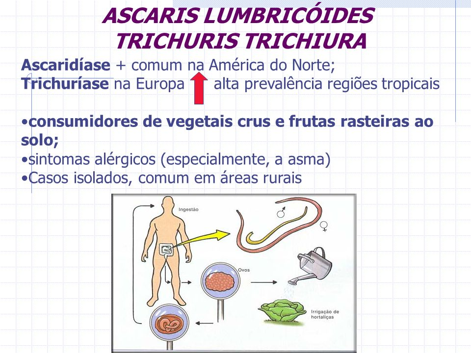 ASCARIS LUMBRICÓIDES TRICHURIS TRICHIURA