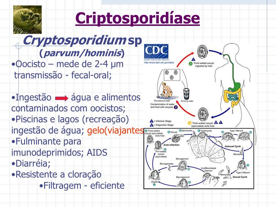 Cryptosporidium sp (parvum/hominis)