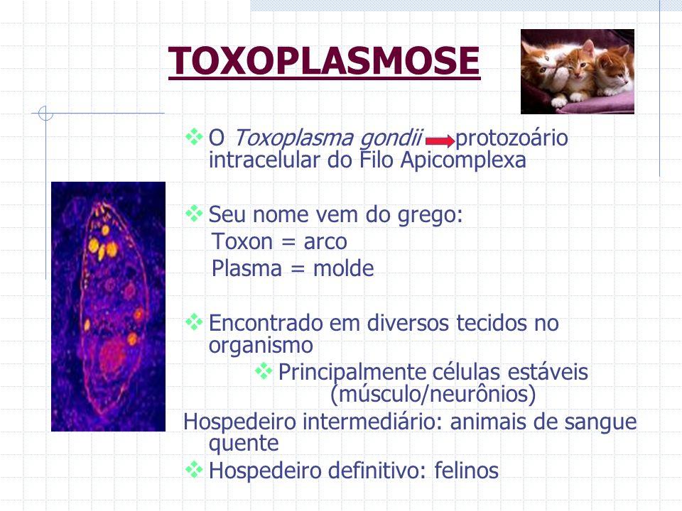 Principalmente células estáveis (músculo/neurônios)