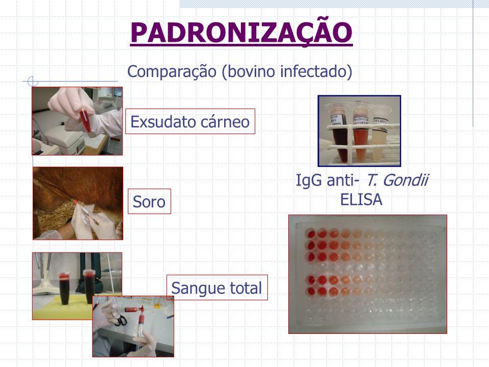 PADRONIZAÇÃO Comparação (bovino infectado) Exsudato cárneo