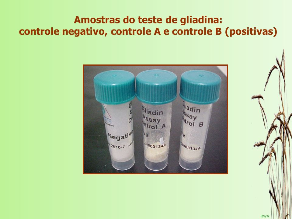 Amostras do teste de gliadina: controle negativo, controle A e controle B (positivas)