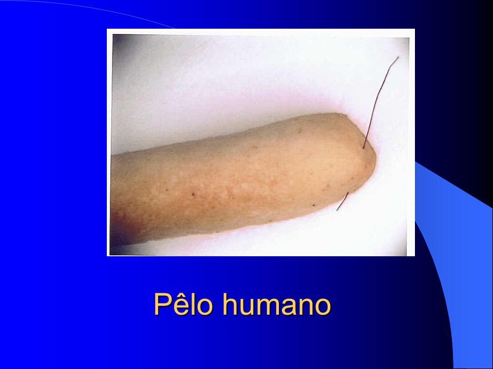Pêlo humano