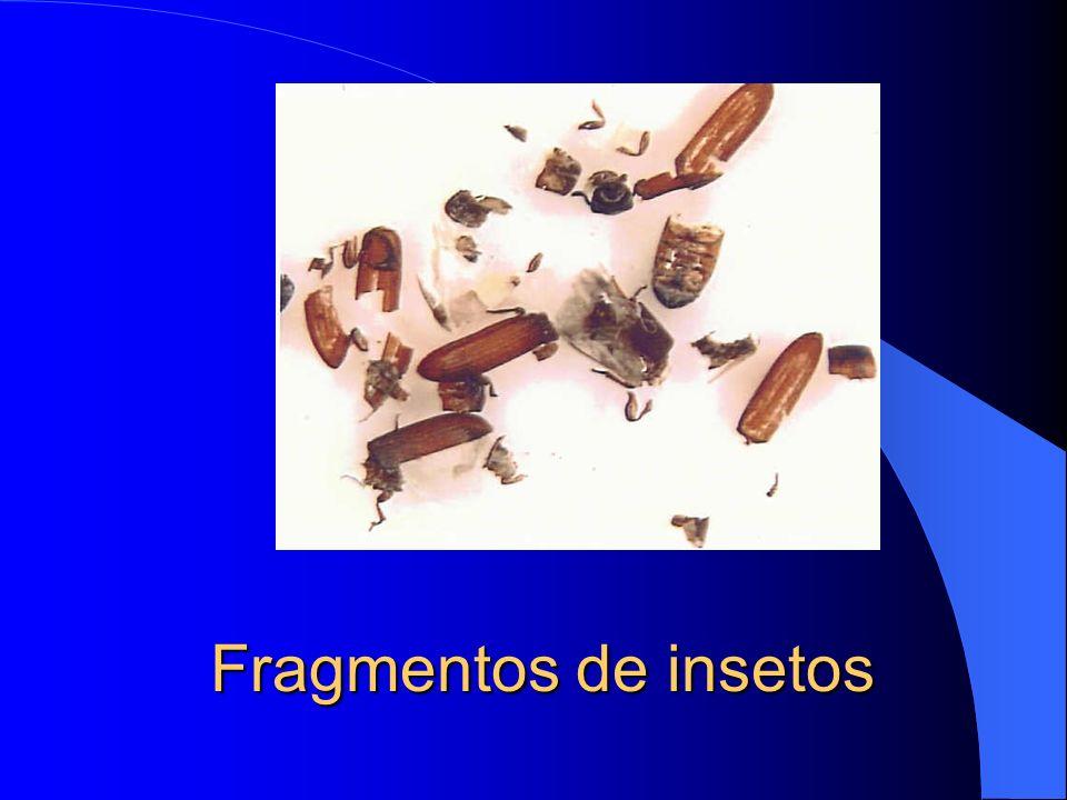 Fragmentos de insetos