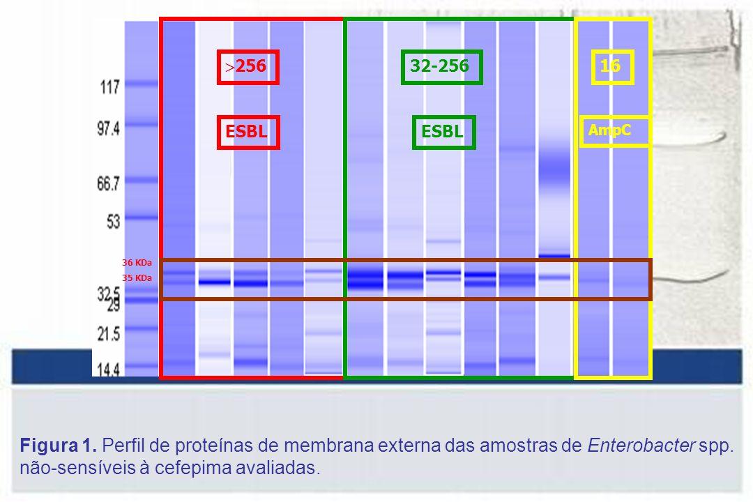 256 ESBL. 32-256. 16. AmpC. 36 KDa. 35 KDa.