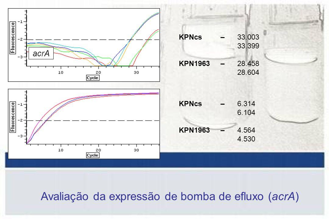 Avaliação da expressão de bomba de efluxo (acrA)