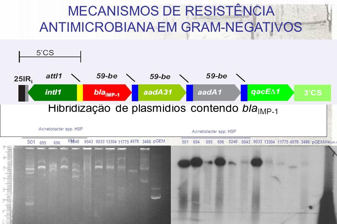 Hibridização de plasmídios contendo blaIMP-1
