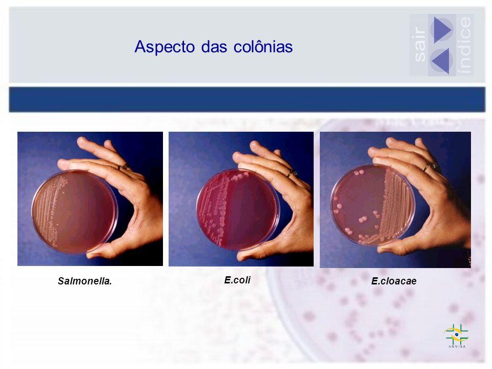 Aspecto das colônias sair índice Salmonella. E.coli E.cloacae