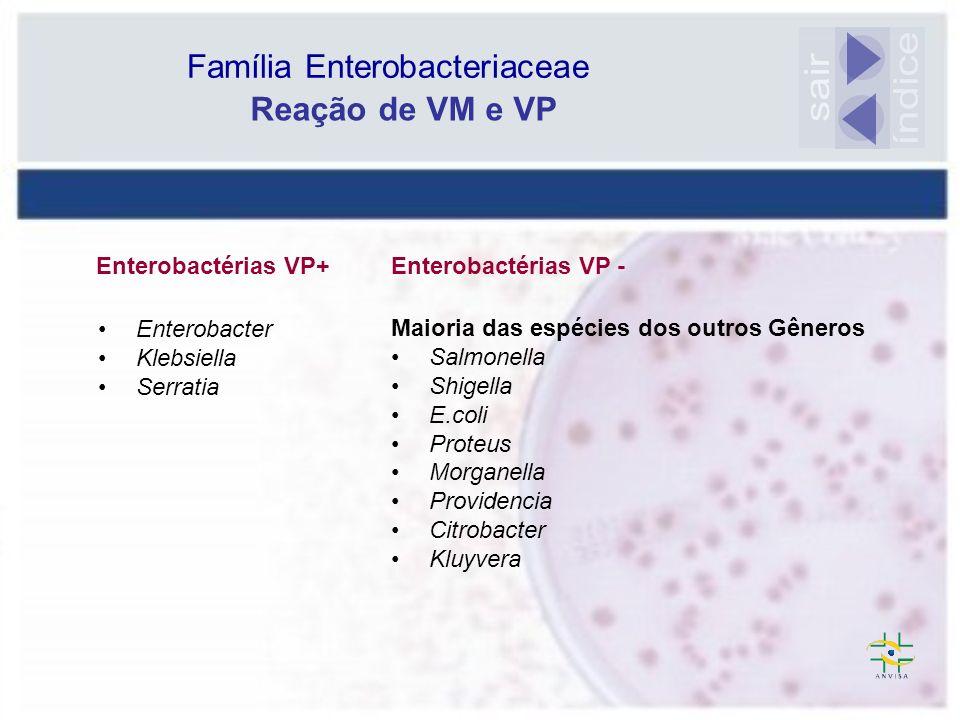 Família Enterobacteriaceae