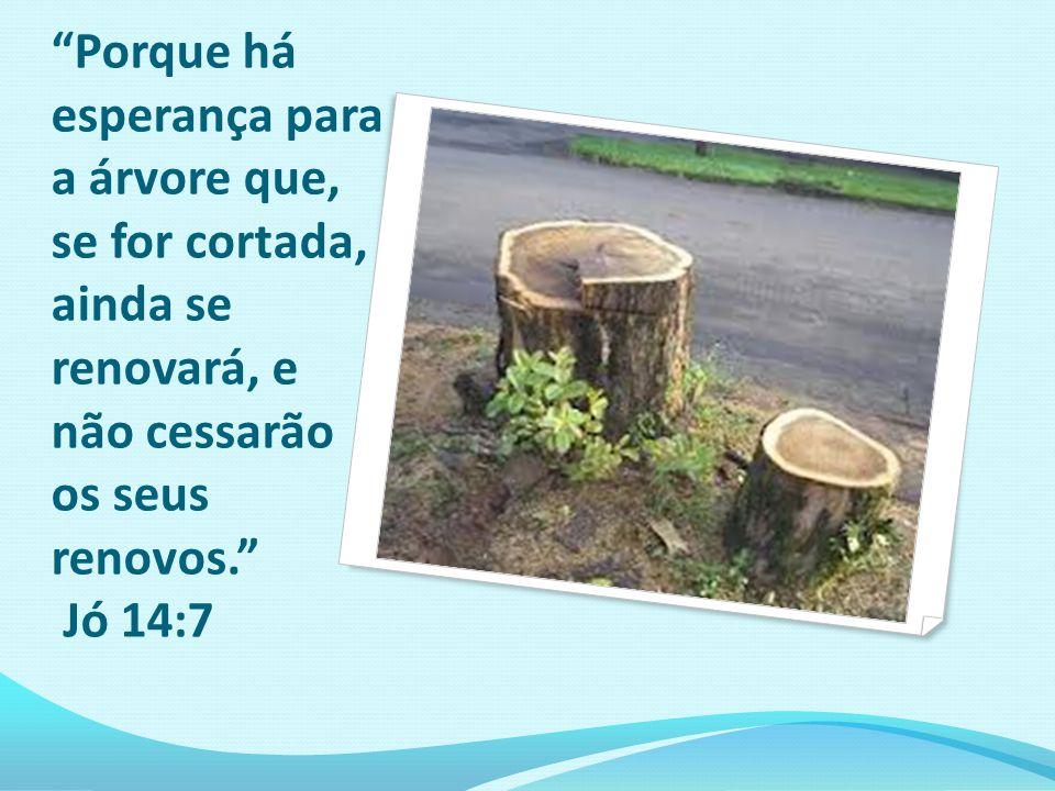 Porque há esperança para a árvore que, se for cortada, ainda se renovará, e não cessarão os seus renovos. Jó 14:7