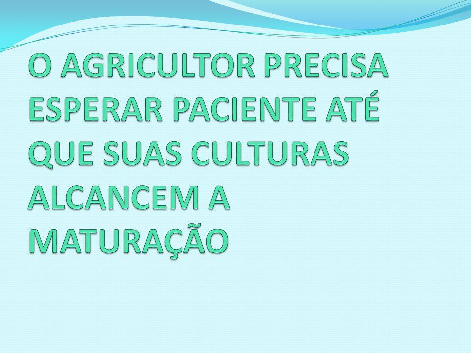 O AGRICULTOR PRECISA ESPERAR PACIENTE ATÉ QUE SUAS CULTURAS ALCANCEM A MATURAÇÃO