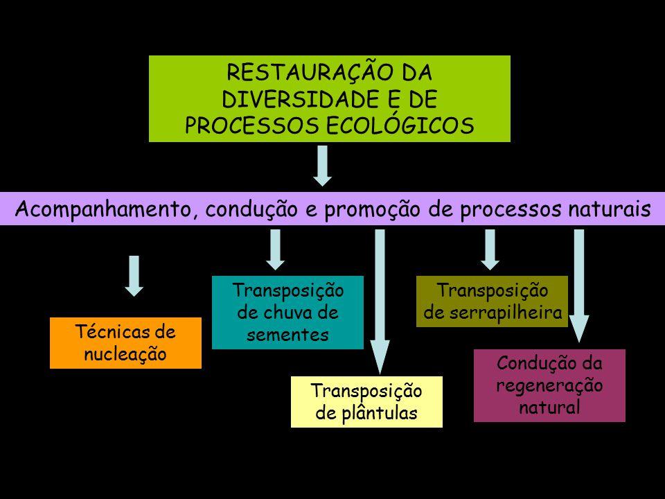 RESTAURAÇÃO DA DIVERSIDADE E DE PROCESSOS ECOLÓGICOS