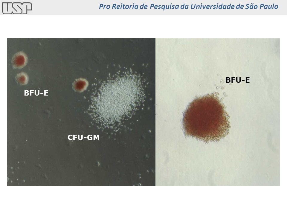 Pro Reitoria de Pesquisa da Universidade de São Paulo
