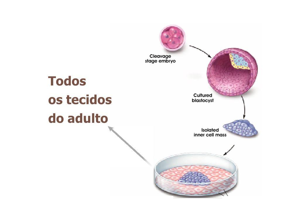 Todos os tecidos do adulto