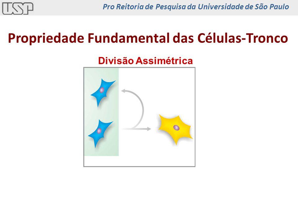 Propriedade Fundamental das Células-Tronco