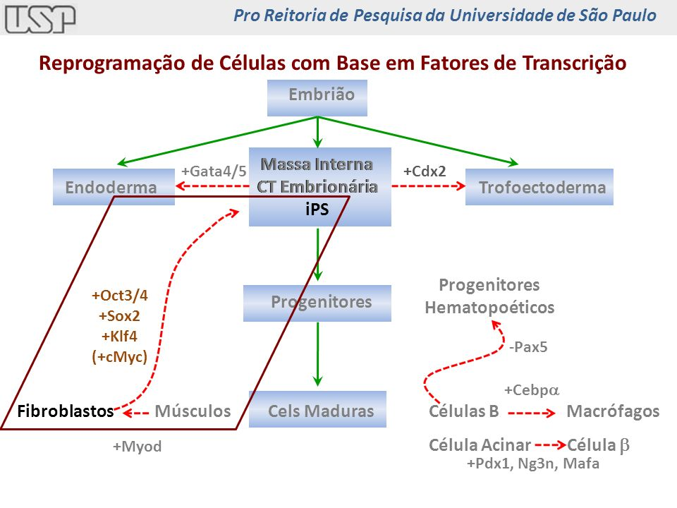 Reprogramação de Células com Base em Fatores de Transcrição