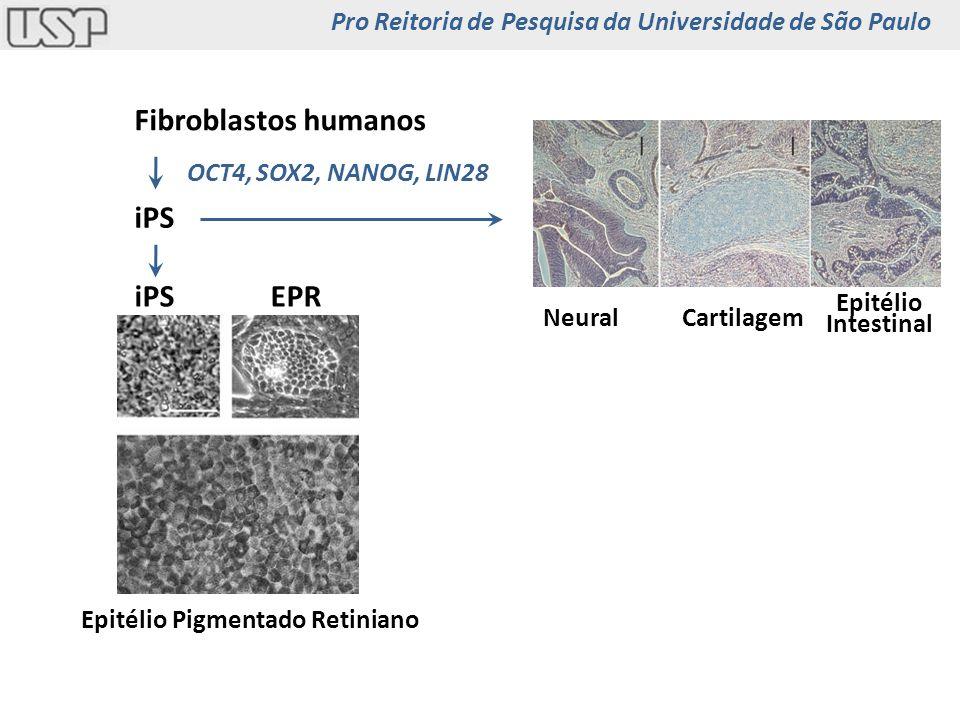 Fibroblastos humanos iPS iPS EPR