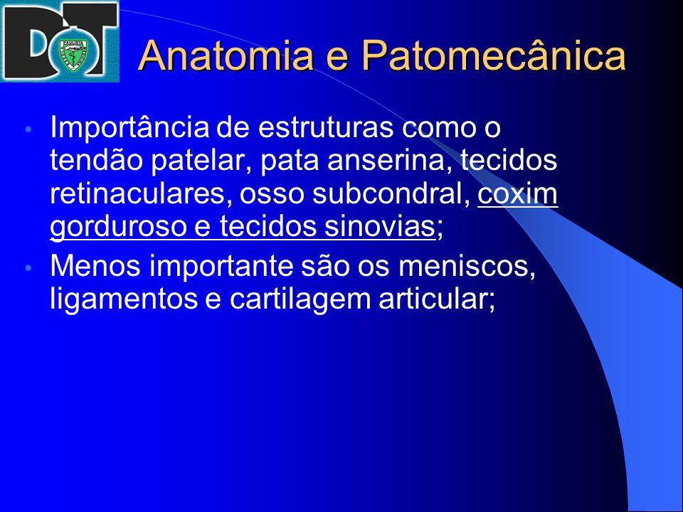 Anatomia e Patomecânica