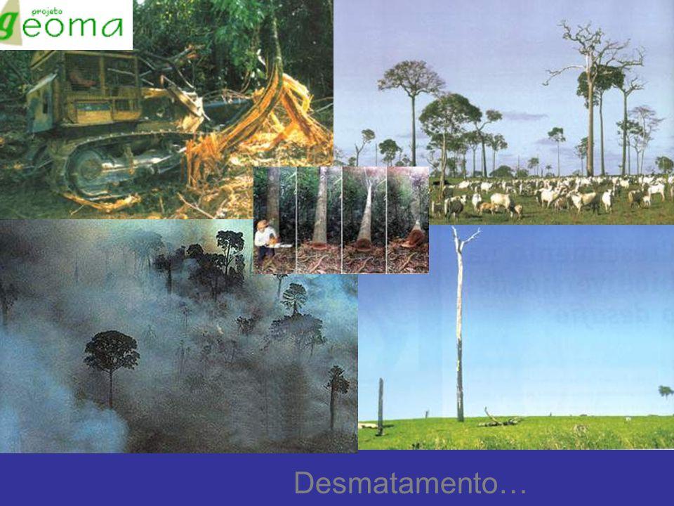 Desmatamento…