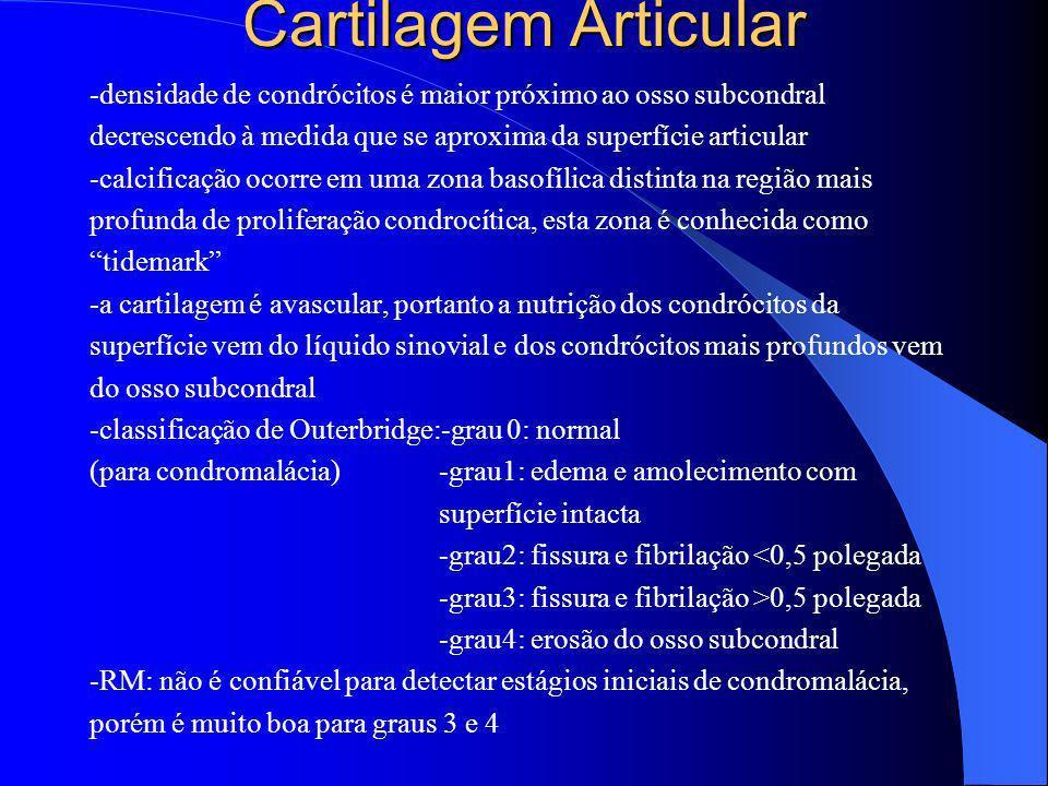 Cartilagem Articular-densidade de condrócitos é maior próximo ao osso subcondral. decrescendo à medida que se aproxima da superfície articular.