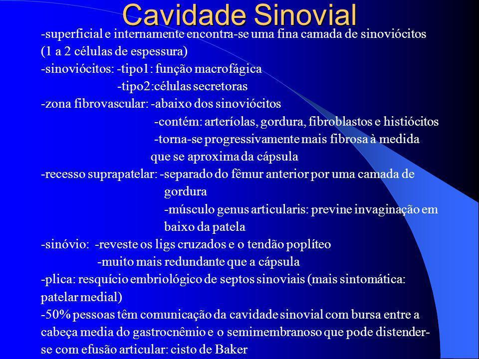 Cavidade Sinovial-superficial e internamente encontra-se uma fina camada de sinoviócitos. (1 a 2 células de espessura)