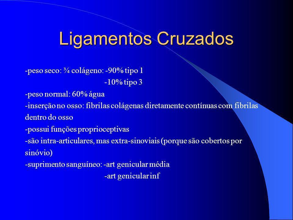 Ligamentos Cruzados -peso seco: ¾ colágeno: -90% tipo 1 -10% tipo 3