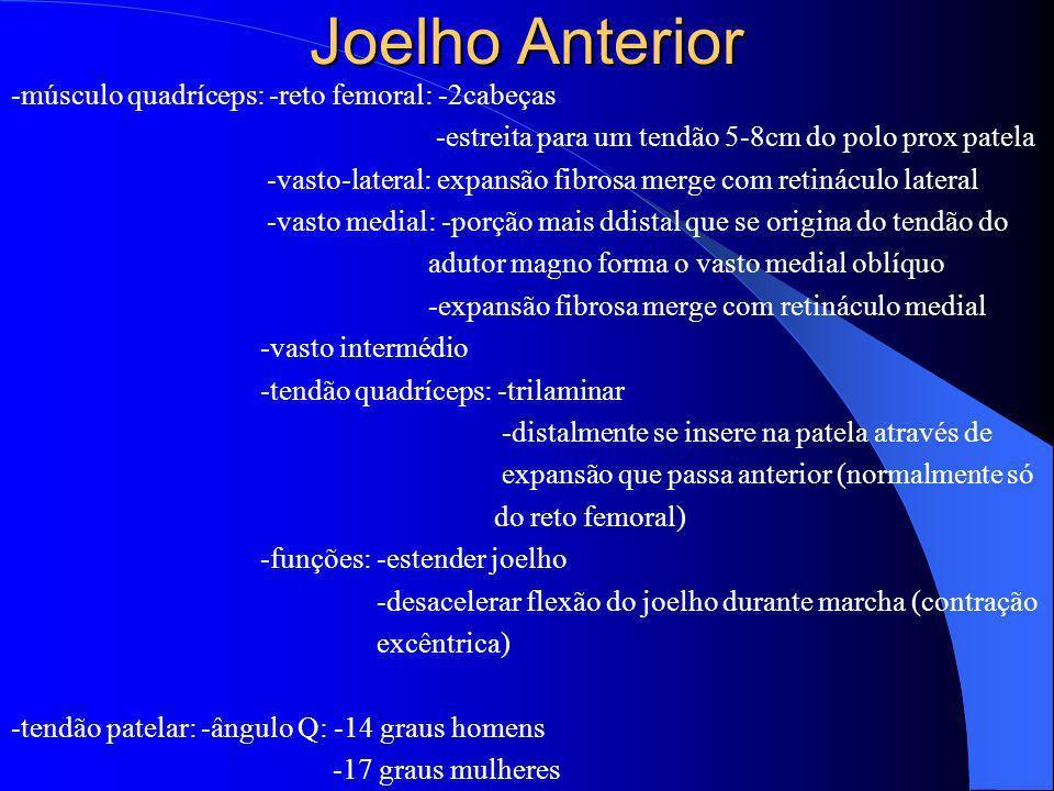 Joelho Anterior -músculo quadríceps: -reto femoral: -2cabeças