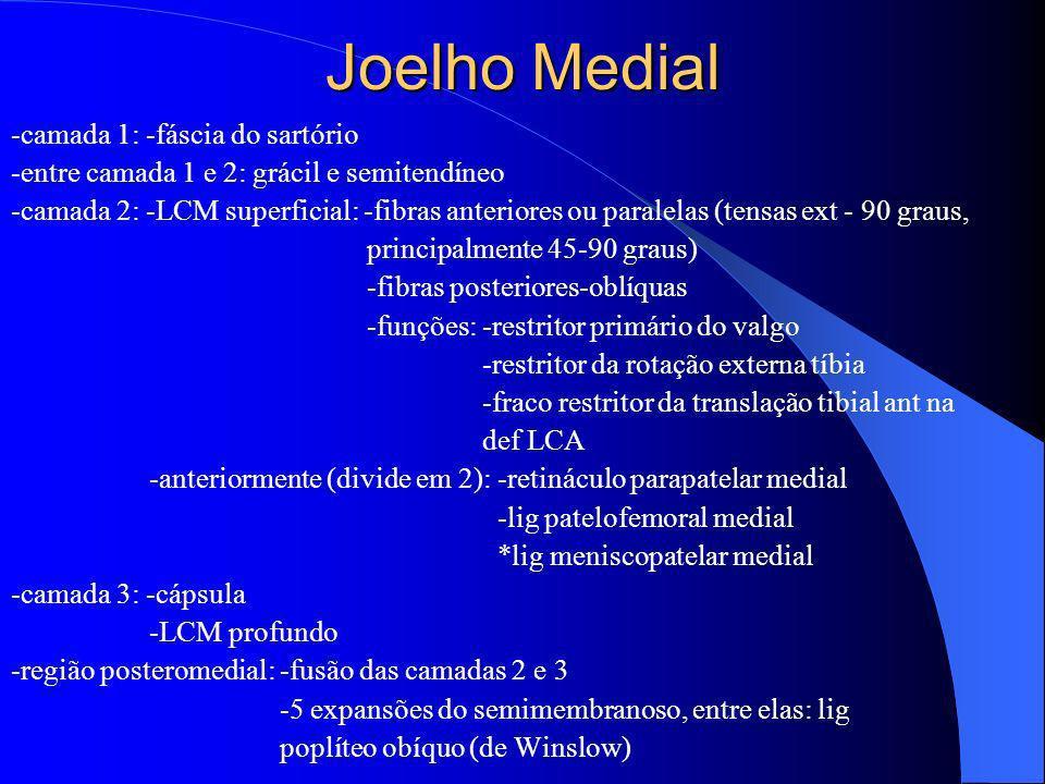 Joelho Medial -camada 1: -fáscia do sartório