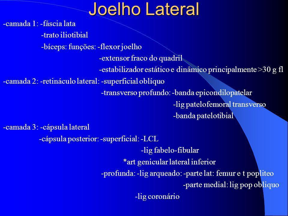 Joelho Lateral -camada 1: -fáscia lata -trato iliotibial