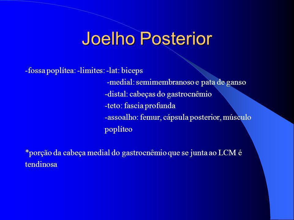 Joelho Posterior -fossa poplítea: -limites: -lat: biceps