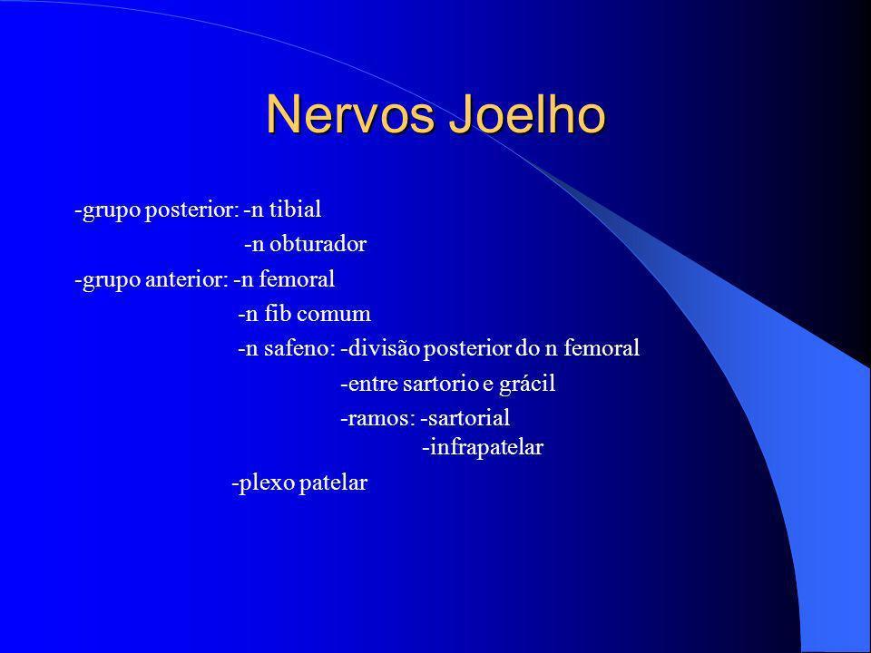 Nervos Joelho -grupo posterior: -n tibial -n obturador