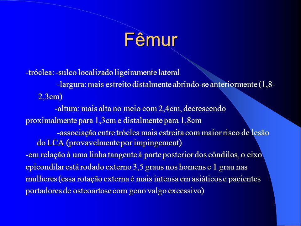 Fêmur -tróclea: -sulco localizado ligeiramente lateral