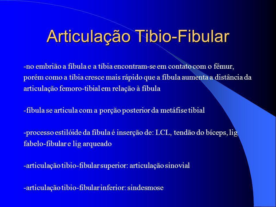 Articulação Tibio-Fibular