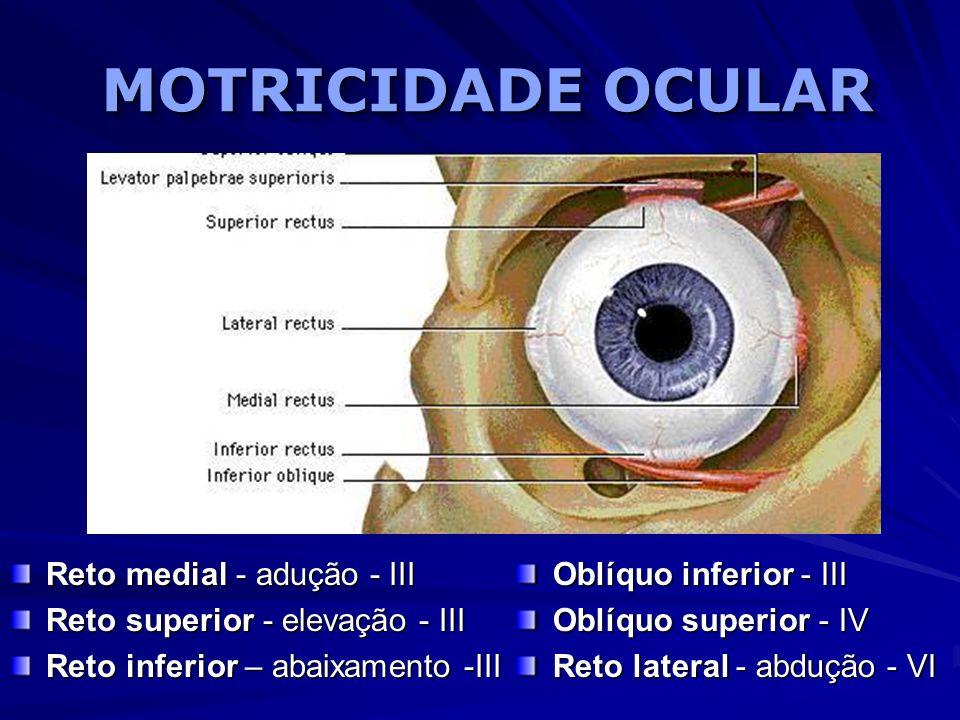 MOTRICIDADE OCULAR Reto medial - adução - III