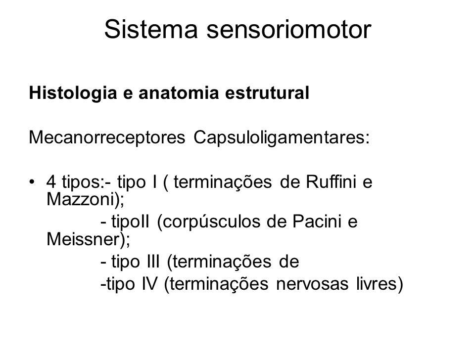 Sistema sensoriomotor