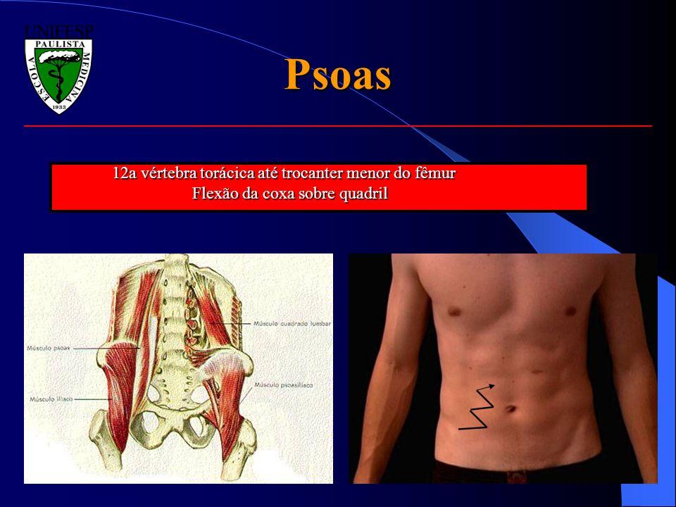 Psoas 12a vértebra torácica até trocanter menor do fêmur