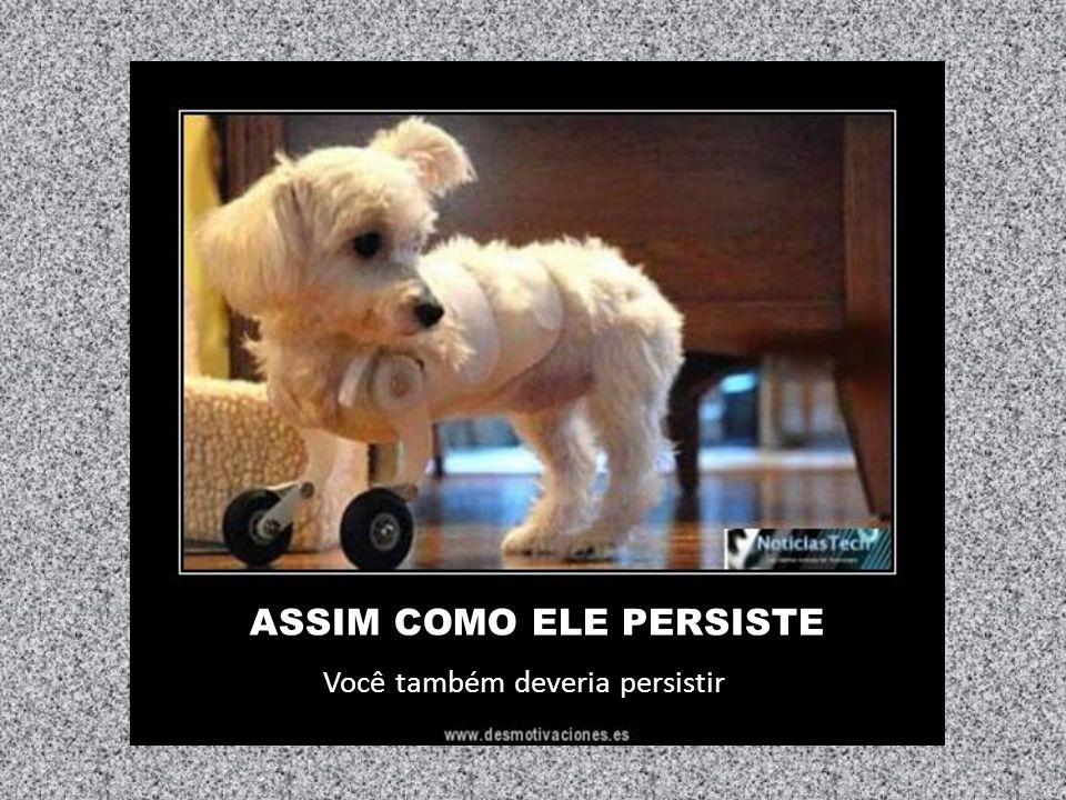 ASSIM COMO ELE PERSISTE