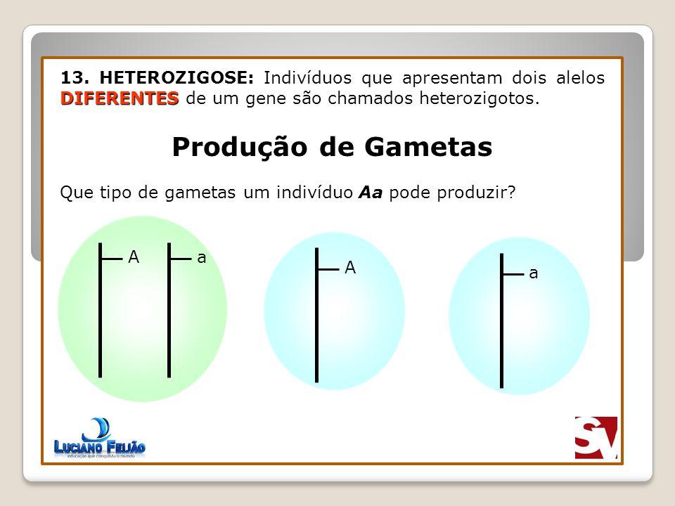 13. HETEROZIGOSE: Indivíduos que apresentam dois alelos DIFERENTES de um gene são chamados heterozigotos.