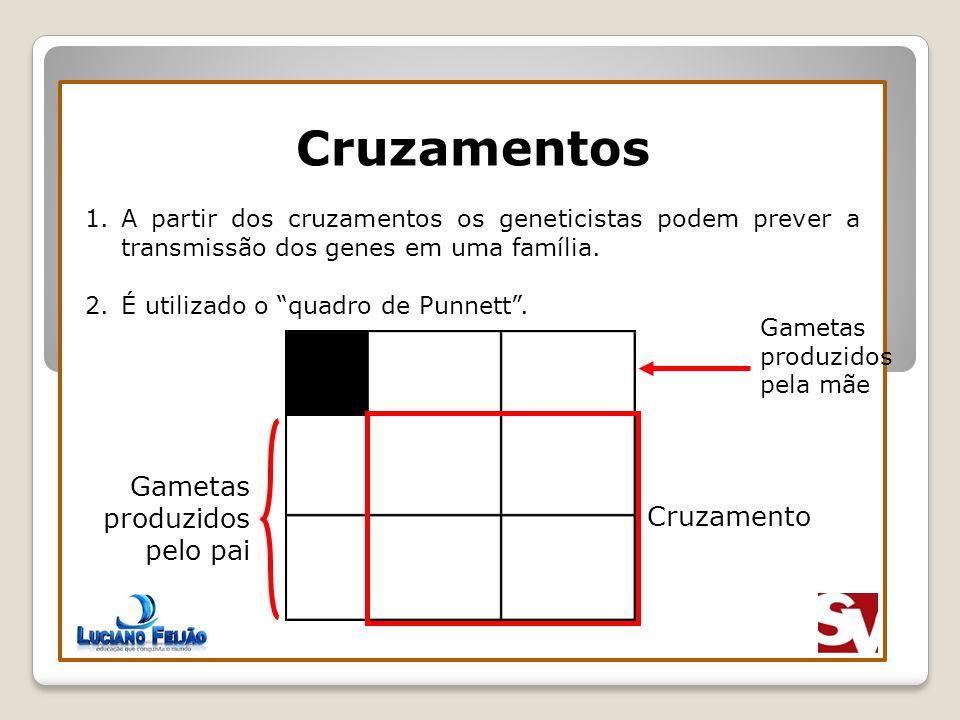 Cruzamentos 2N Gametas produzidos pelo pai Cruzamento