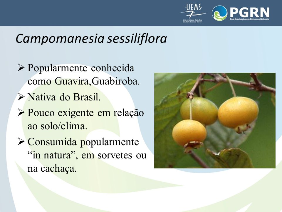 Campomanesia sessiliflora