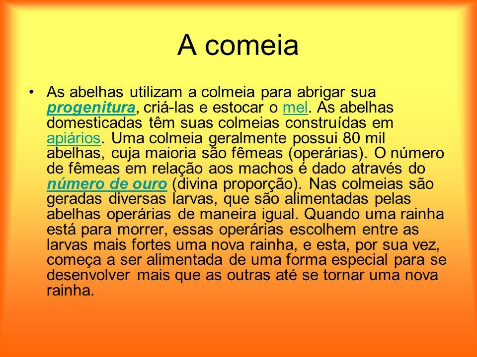 A comeia