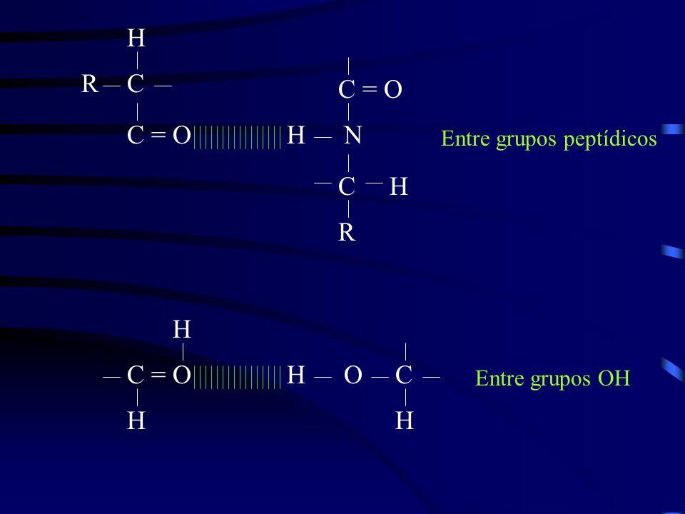H R C C = O C = O H N C H R H C = O H O C H H Entre grupos peptídicos