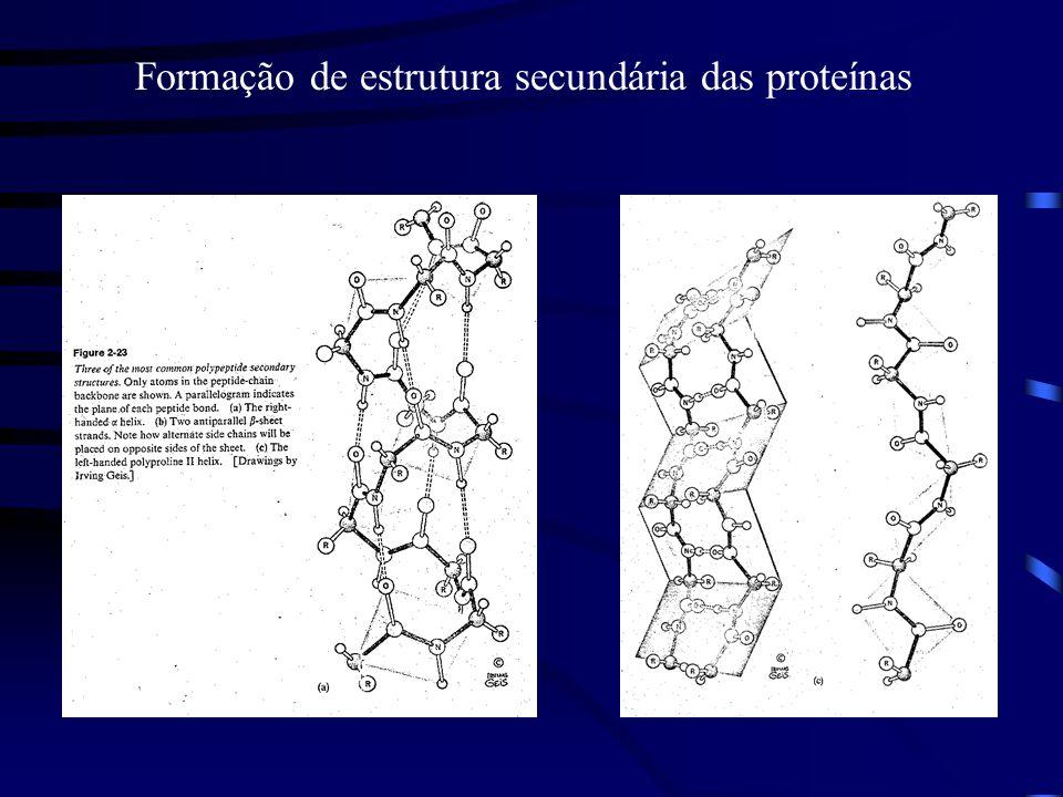 Formação de estrutura secundária das proteínas