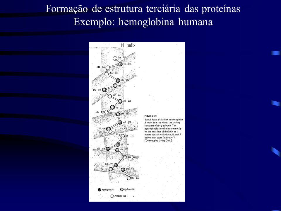 Formação de estrutura terciária das proteínas