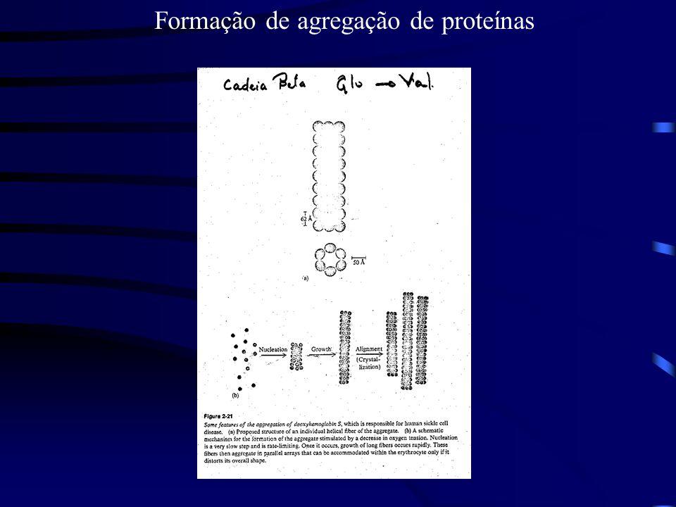 Formação de agregação de proteínas