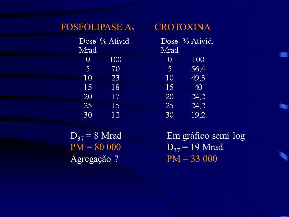FOSFOLIPASE A2 CROTOXINA. D37 = 8 Mrad. PM = 80 000. Agregação Em gráfico semi log. D37 = 19 Mrad.