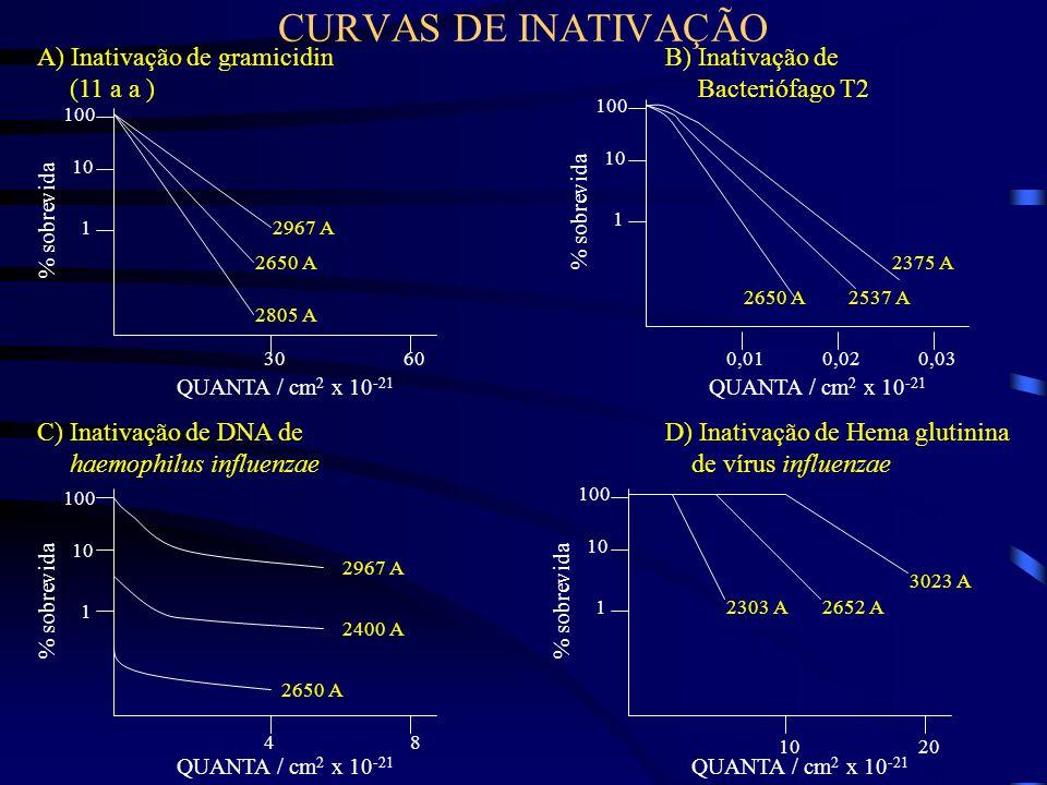 CURVAS DE INATIVAÇÃO A) Inativação de gramicidin (11 a a )