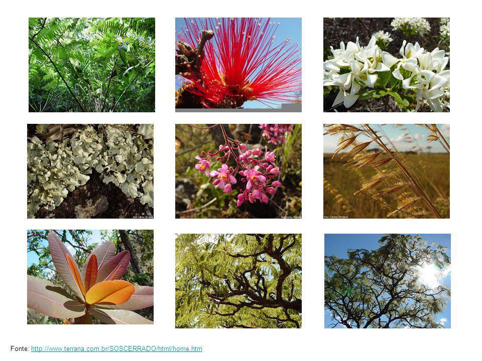 Fonte: http://www.terrana.com.br/SOSCERRADO/html/home.htm