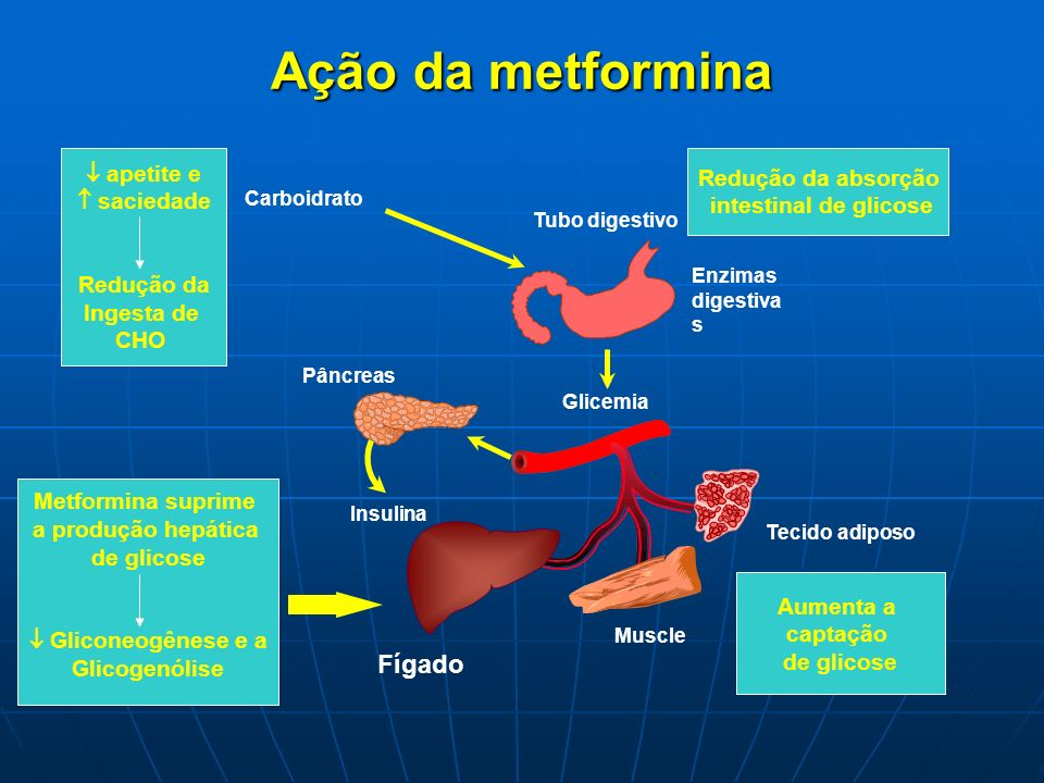 Ação da metformina Fígado  apetite e Redução da absorção  saciedade