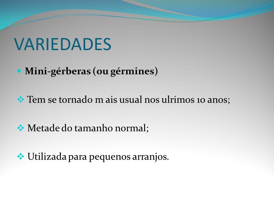 VARIEDADES Mini-gérberas (ou gérmines)